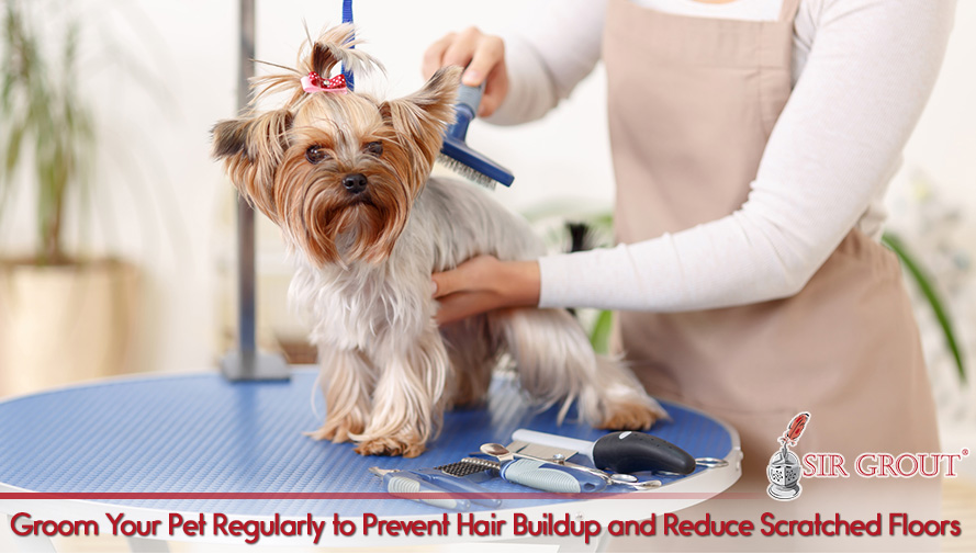 Groom Your Pet to Keep Hair and Nails at Bay